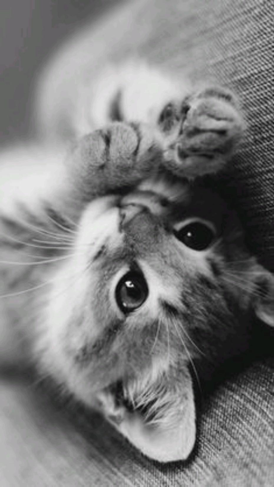 #Cat #cutie pie# black and white #aesthetic# love #kitten# beautiful