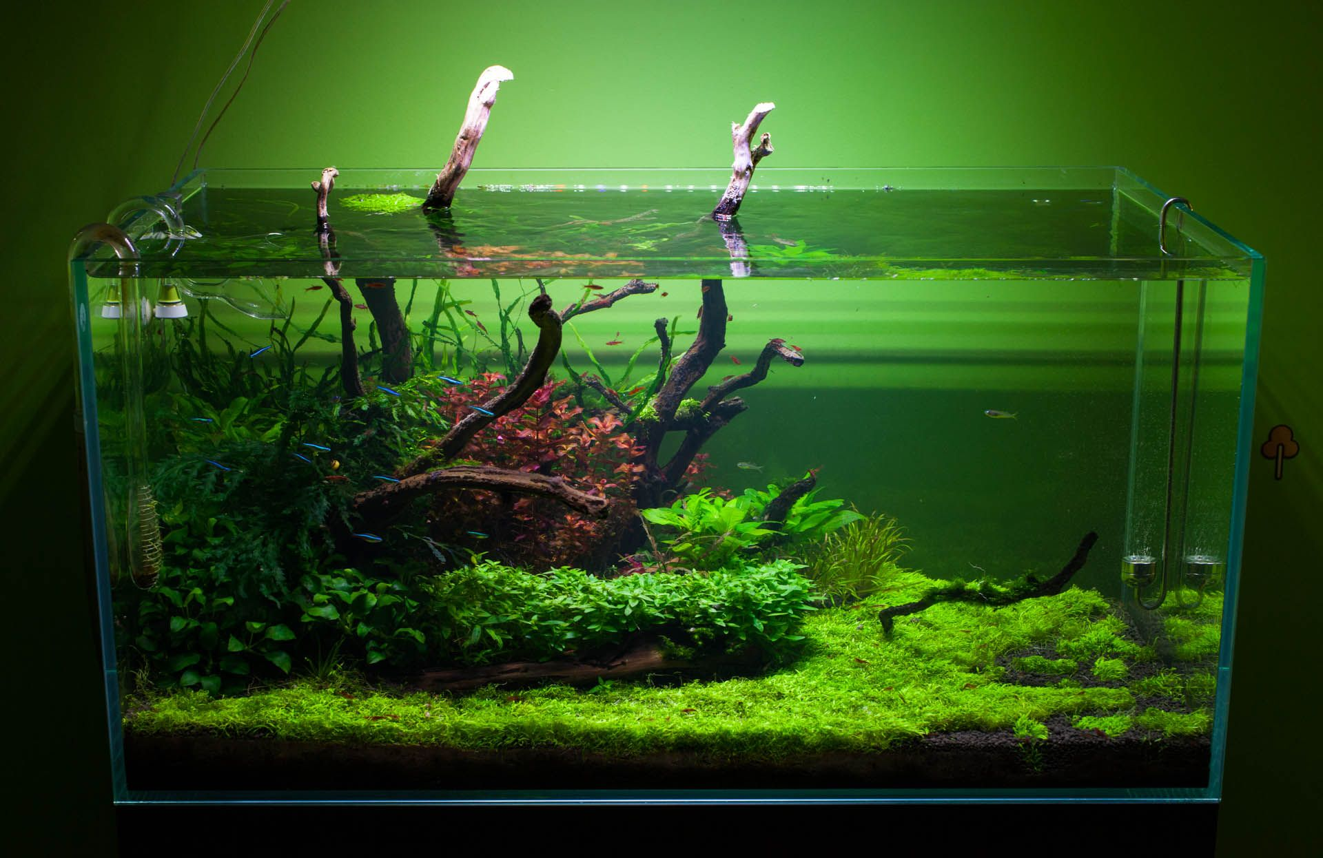 Freshwater fish for 5 gallon tank - Beautiful Planted Tank