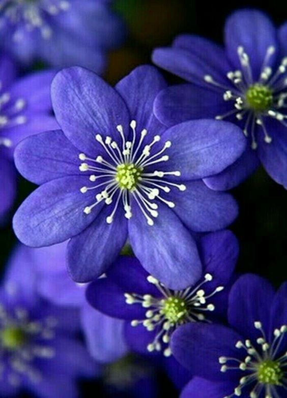 30+ Most Beautiful PURPLE FLOWERS In The World!! (HD IMAGES | Small ...