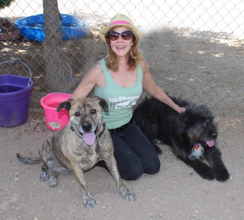 Adopt Tibby on Terrier dogs, Tibetan terrier, Adoption