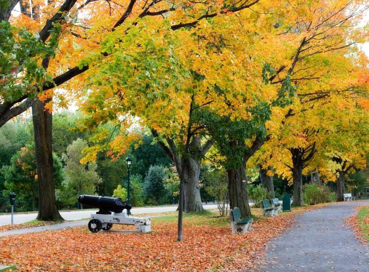 Battlefields Park In Autumn Image By Muchemistry Getty Quebec