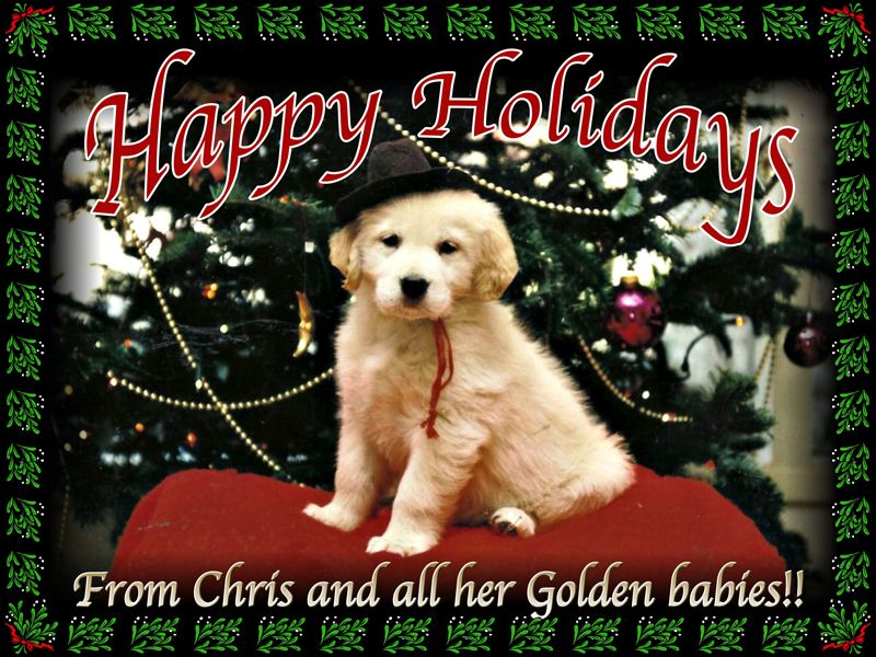 Eldorado Goldens Chrismas Card Golden Retriever Breeder Golden