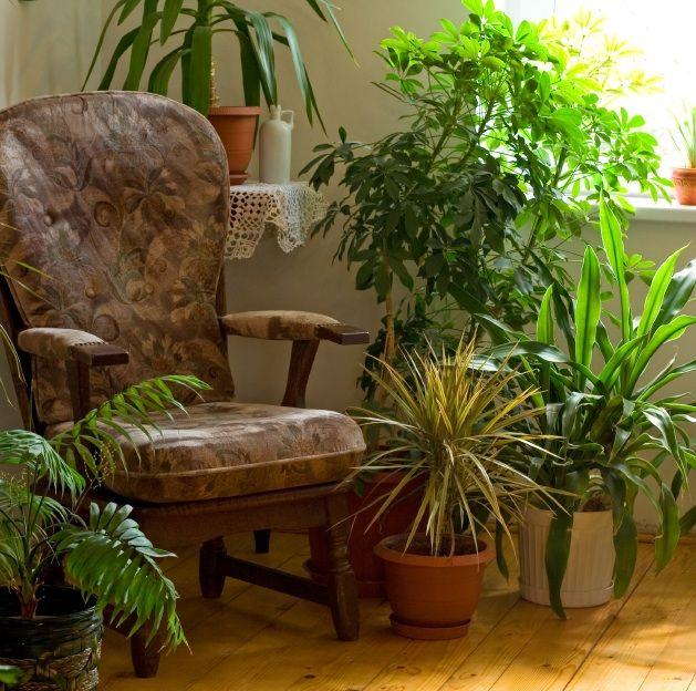 10 Houseplants that Detox Your Home Decoracion Pinterest - decoracion de interiores con plantas