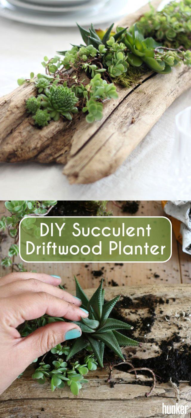 DIY Succulent Driftwood Planter