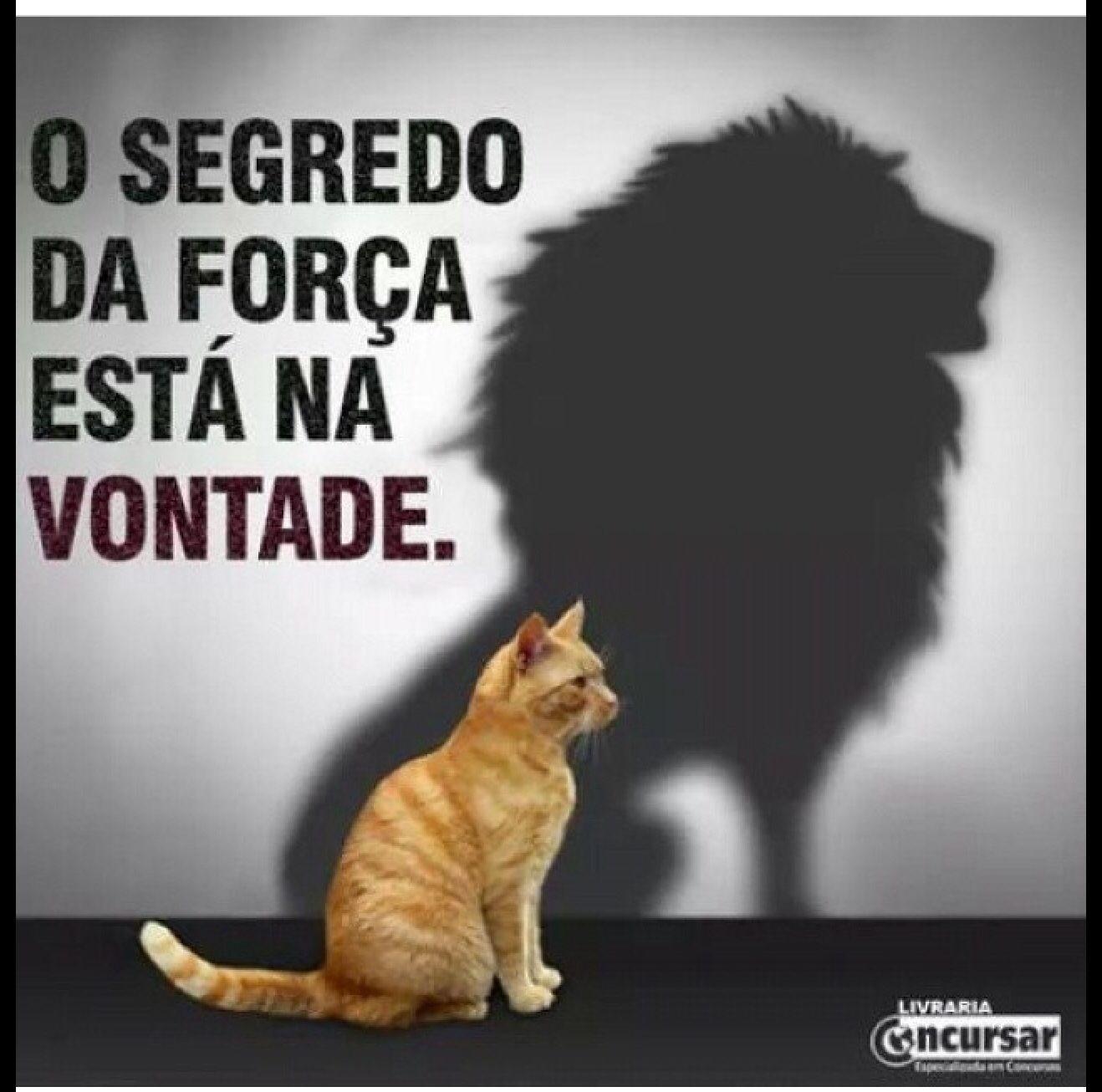 Well-known Força de vontade   Textos, qualquer.   Pinterest   Força de  DZ34