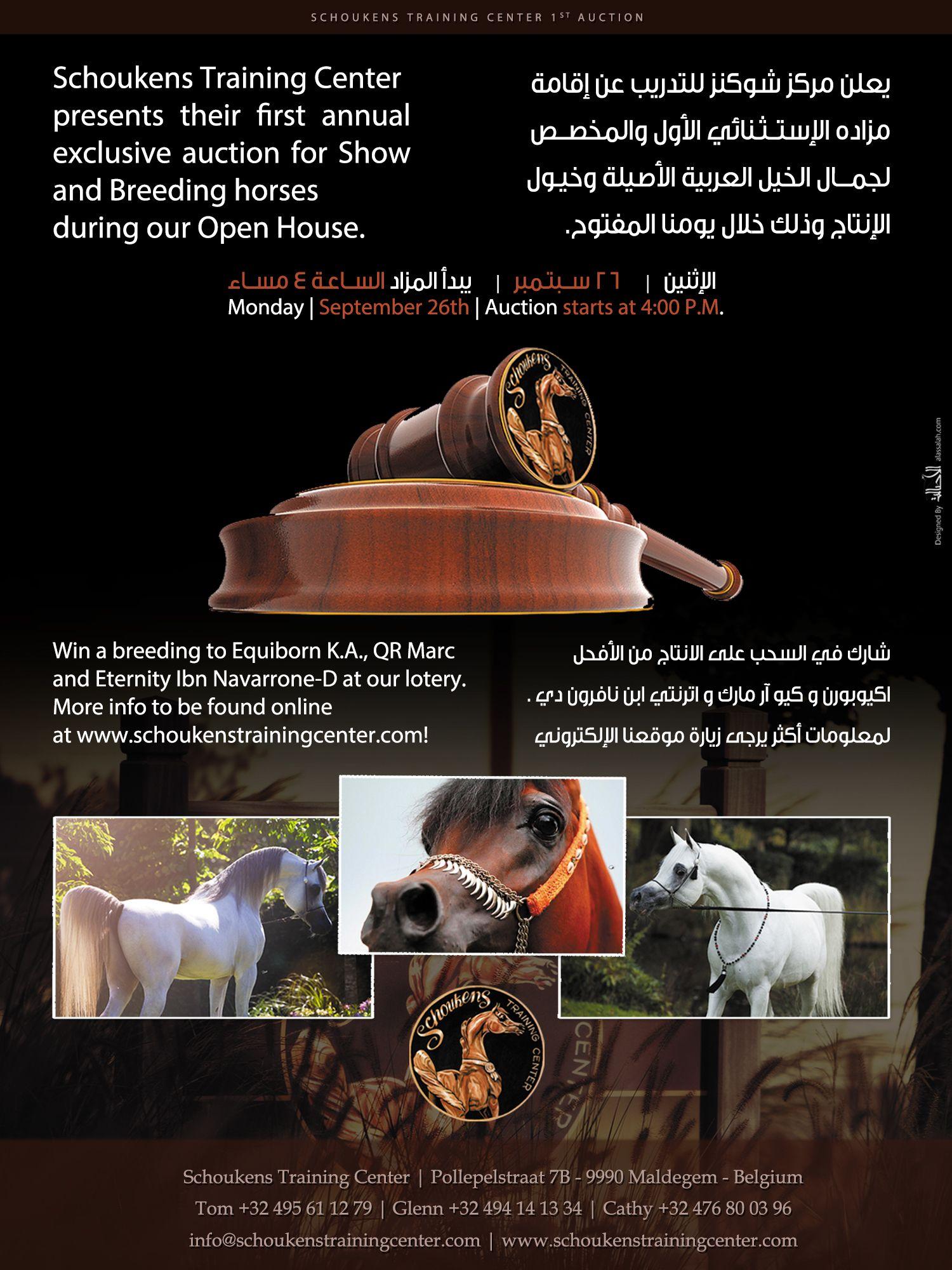 مزاد مركز شوكنز الأول لجمال الخيل العربية Schoukens Training Center 1st Auction Arabian Horse Training Center Uig