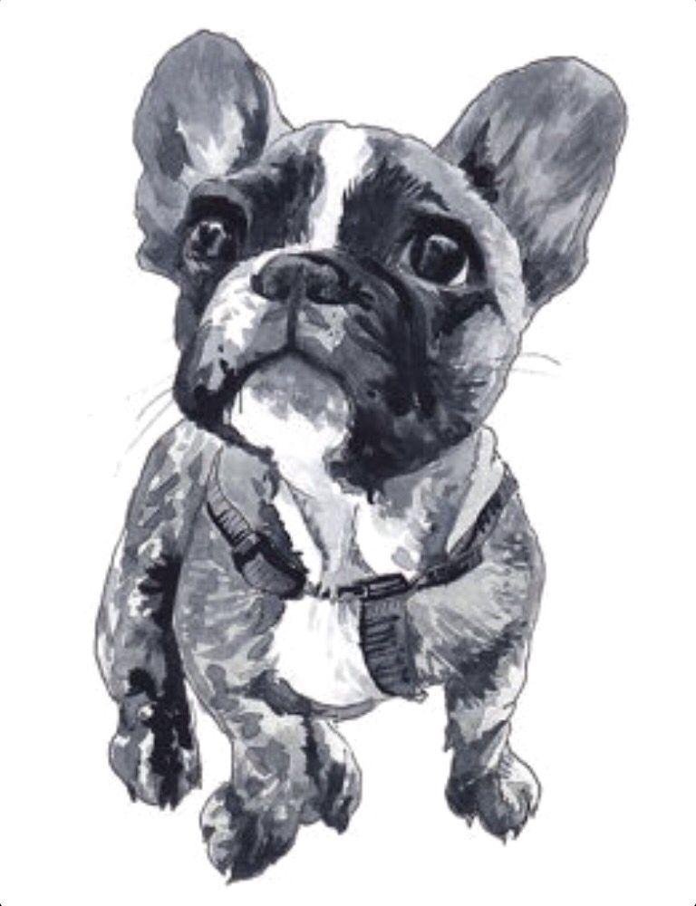 French Bulldog Illustration Art Pinterest Franzosische Bulldoggen Franzosisch Und Aquarell