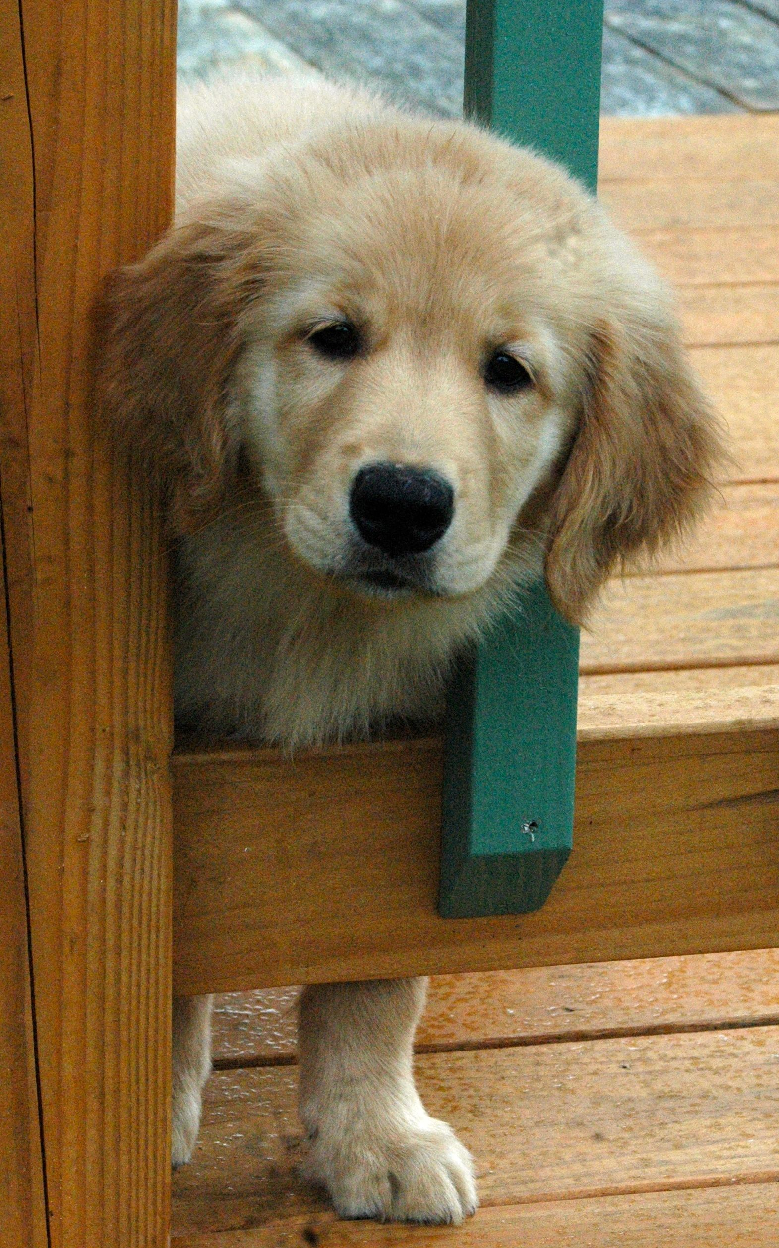 Pin By Lesley Turrell On Cute Animals With Images Cute Animals Golden Retriever I Love Dogs