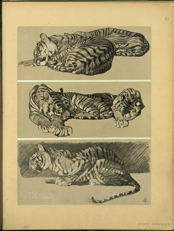 Tigres.