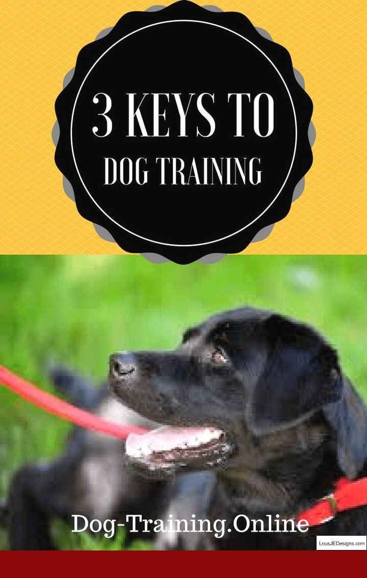 How To Train Your Dog For Protection And Pics Of Tips On House