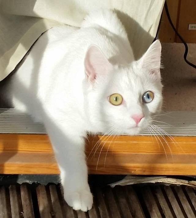 Un Gatto Ricoperto Di Rogna Rischiava La Vista Una Volta Curato Ha