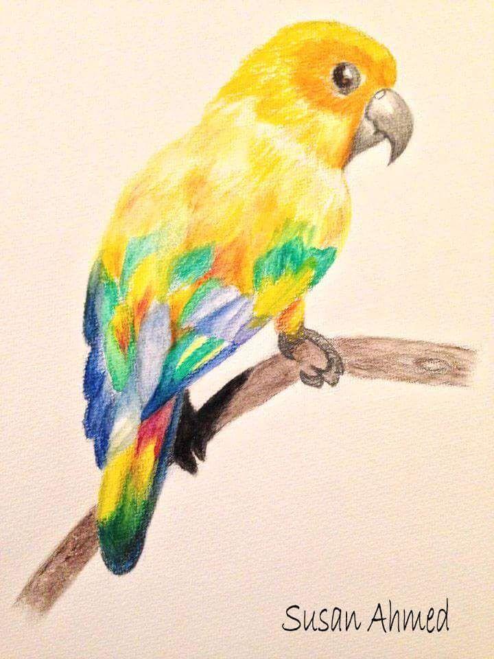 من رسوماتي سوزان أحمد أقلام خشبية مائية طفرة جوز Animals Parrot Bird