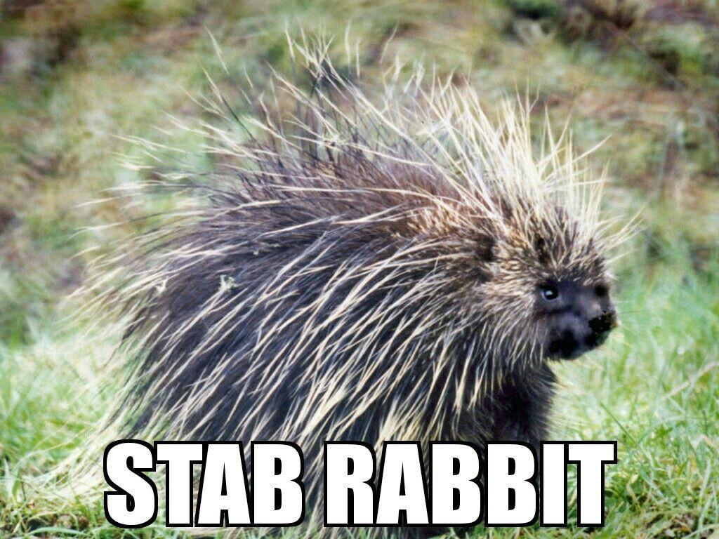 STAB RABBIT Funny animal names, Porcupine, Animals