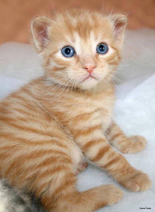 Cute Avalanche Kittens Cutest Kittens Cute Cats