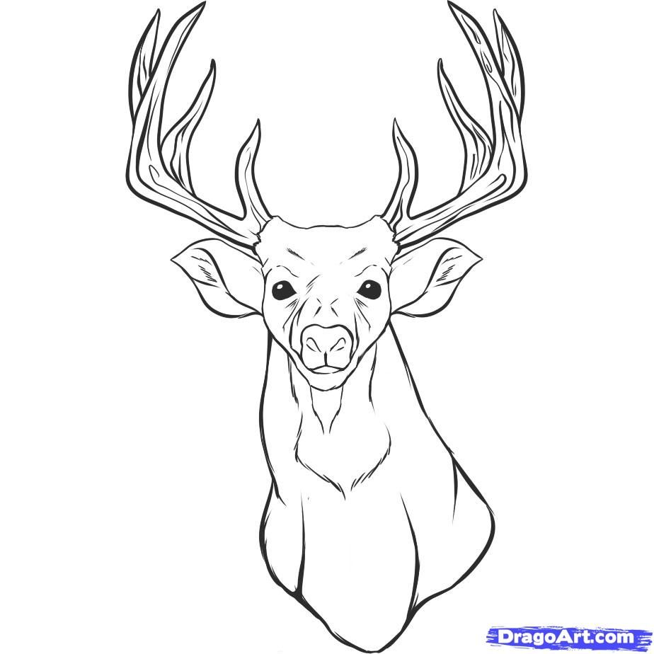 Free coloring page deer