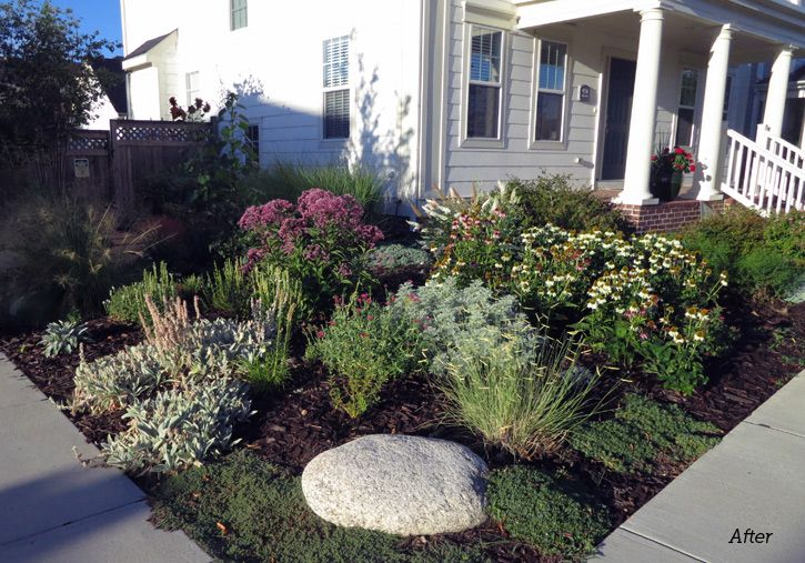 Read why one colorado gardener decided to rip out his lawn for Drought tolerant yard