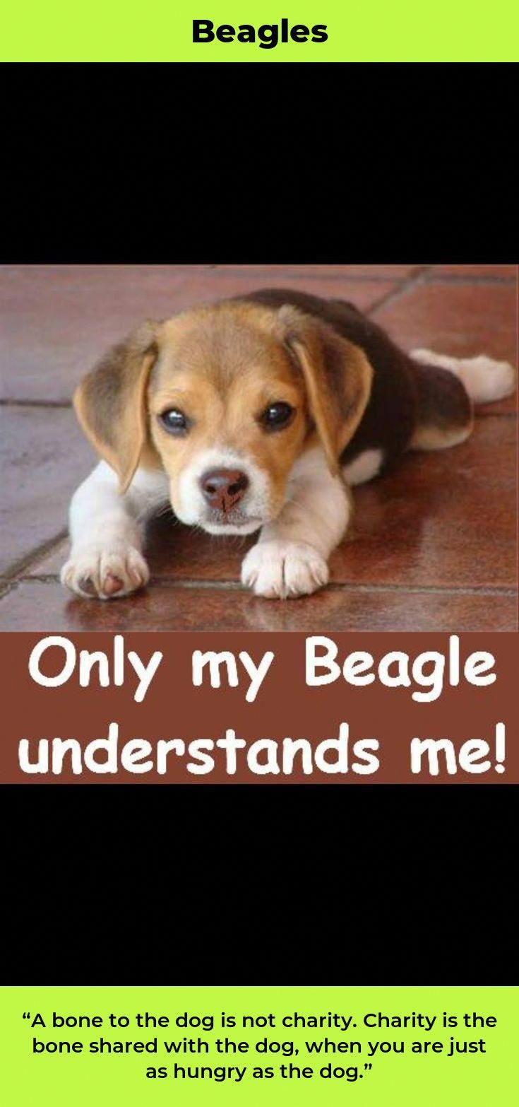 Facts On The Loving Beagle Dogs And Kids Beaglestagram