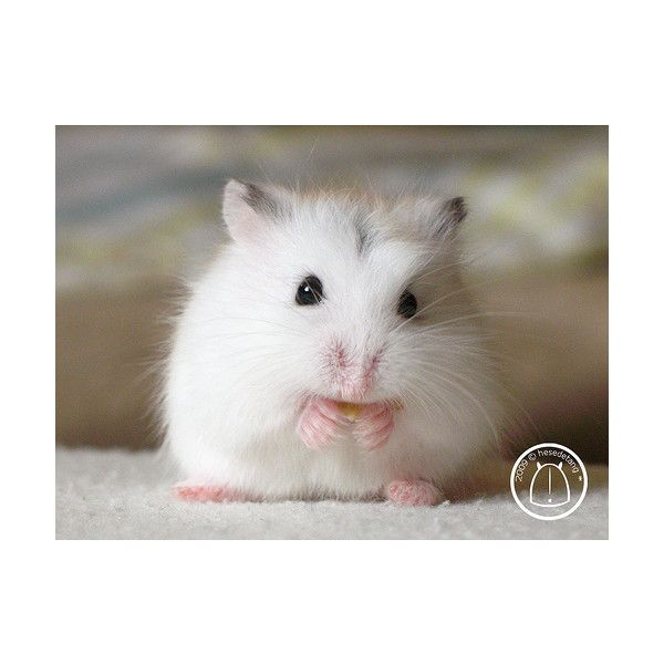 The Animal Blog [CREDIT: minethatbird] ❤ liked on Polyvore featuring animals, pets and cute animals