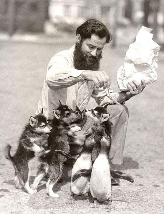 Винтажные портреты с животными | Винтажная собака, Фото ...