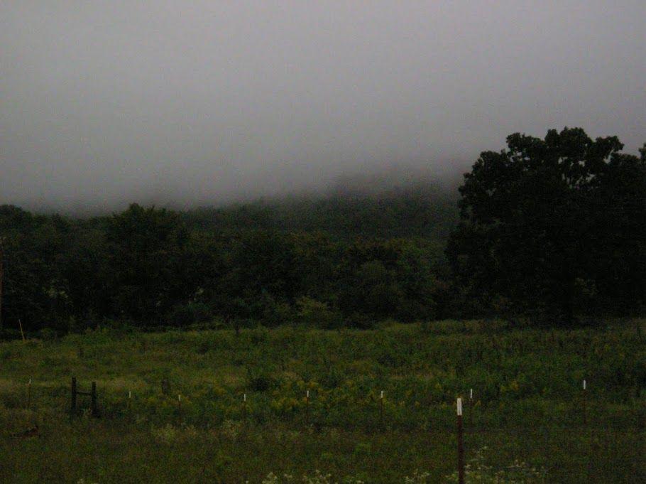thoughts from frank fern homesteading blogs favorite blogs rh pinterest es