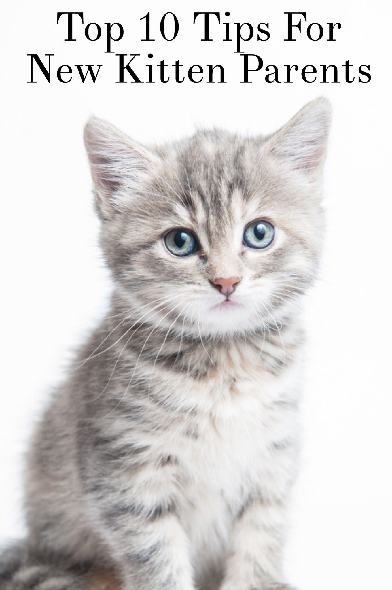Considering A Feline Addition To The Family Cats Make Great Pets
