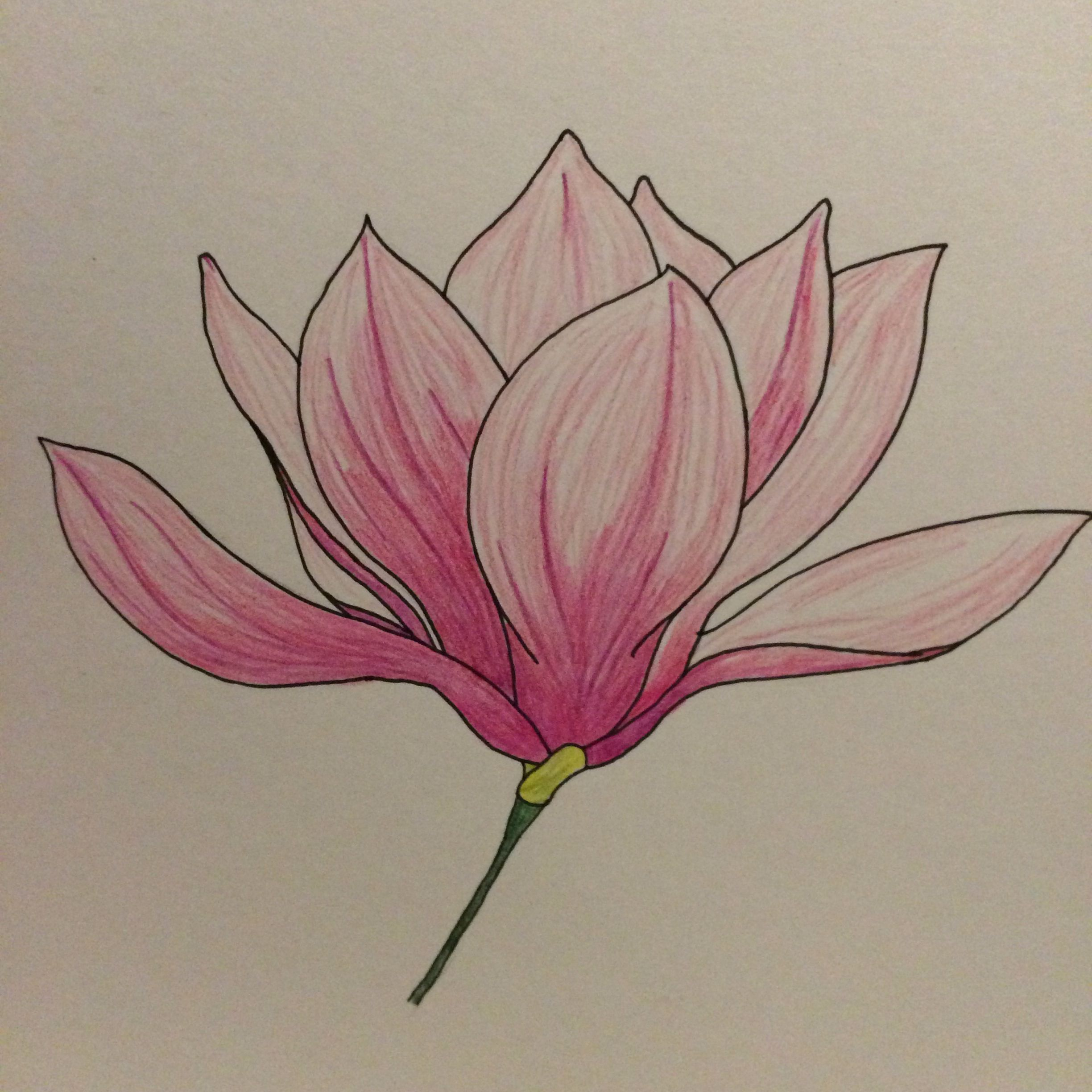 Colored Pencil Drawing Of A Pink Magnolia Flower Leaf Drawing Flower Painting Magnolia Colors