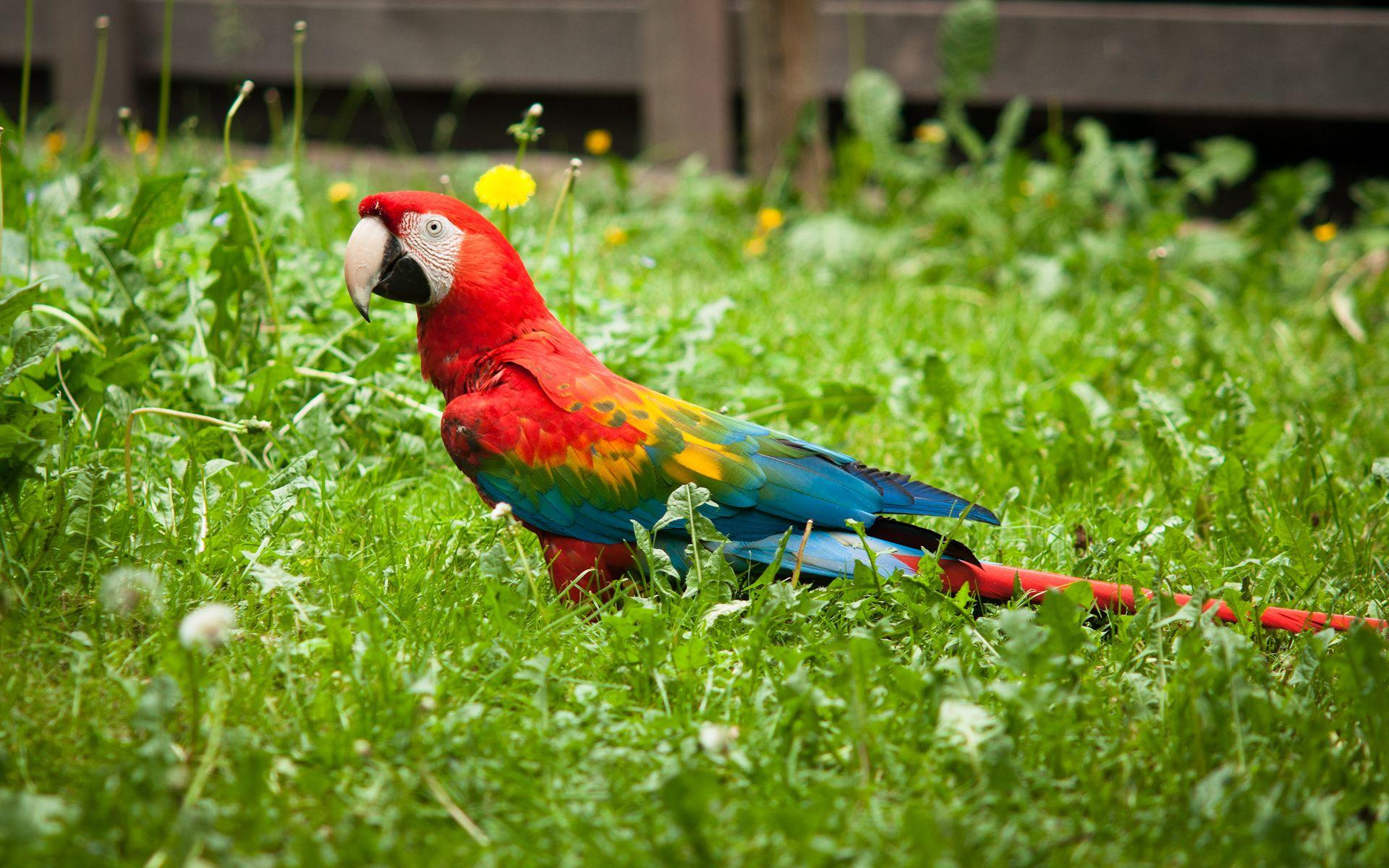 Parrots hd wallpapers precious souls pinterest background hd parrots hd wallpapers voltagebd Images