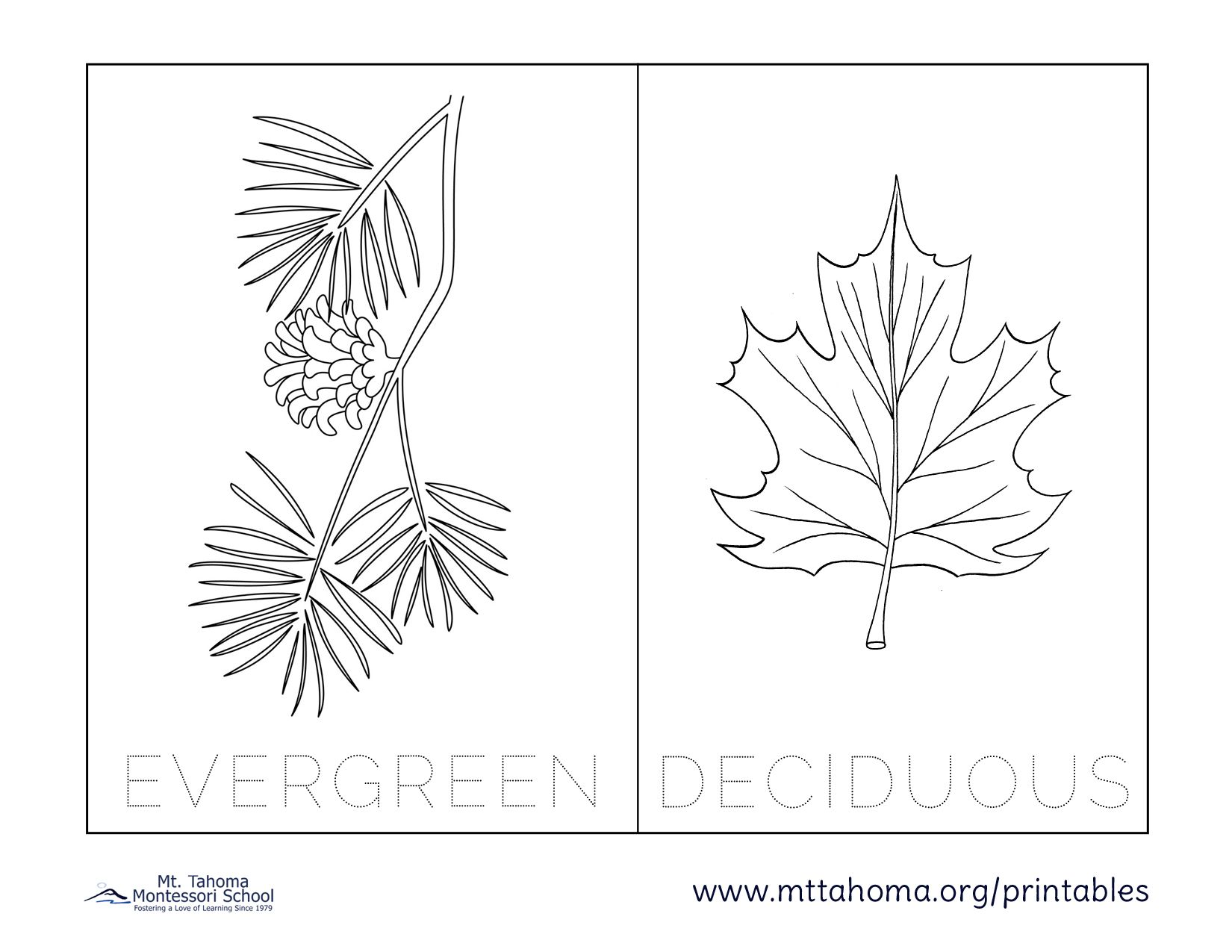 Evergreen Deciduous Withlabels