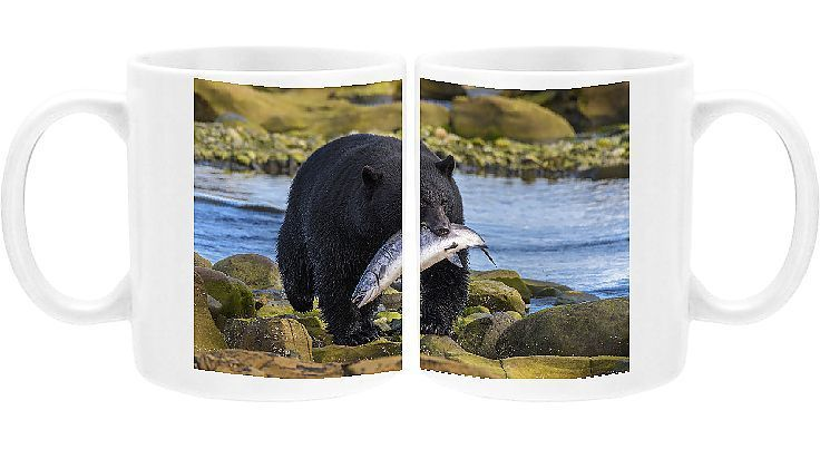 Photo of Print of Canada, British Columbia. Black bear with freshly caught Coho salmon