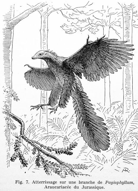 Archaeopteryx lithographica by M. Reichel, 1941