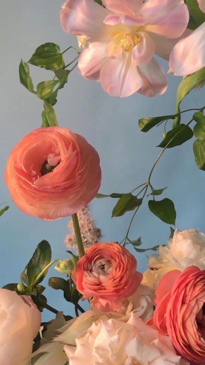 Epingle Par Olivia R Sur Projet Papier Peint A Fleurs Fond D Ecran Telephone Fond D Ecran Couleur