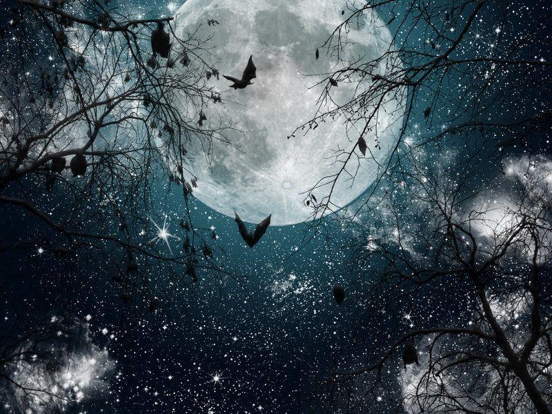 The bats by jinxywinxy on deviantart beautiful moon