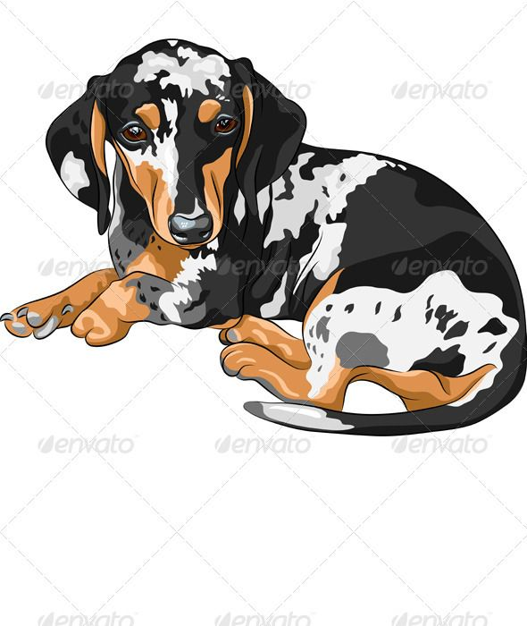 Vector Sketch Dog Dachshund Breed Lying Dachshund Illustration