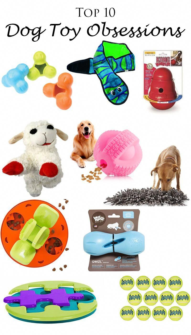Nyx S Top 10 Dog Toy Obsessions Nyx The Standard Poodle Puppy Is