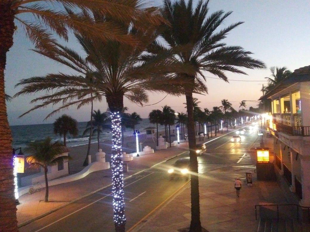 Las Olas Palm Trees Palm Tree