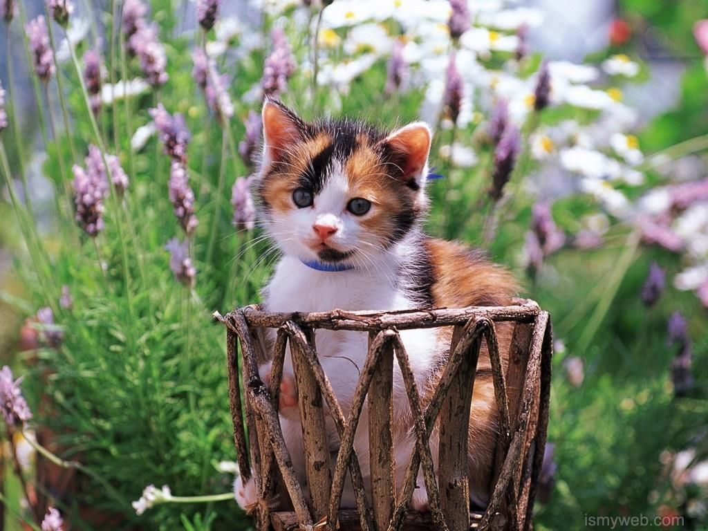 Widescreen Enlarge Adorable Cat Wallpaper Download 10 Pretty Cats Kitten Wallpaper Cats