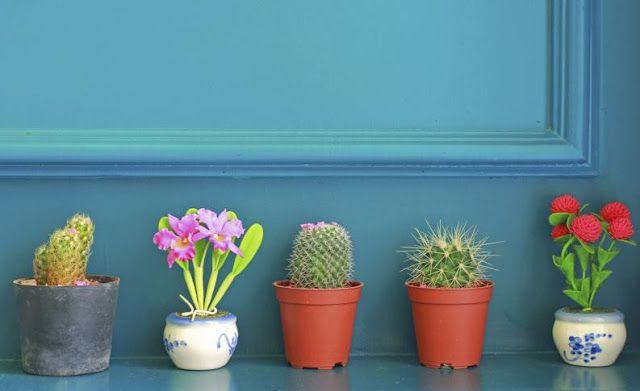 ¿Necesitas ideas para decorar el interior de tu hogar con plantas? ¿ Quieres colocar una planta en tu oficina o jardín? ¿Sabes cuáles ayud...