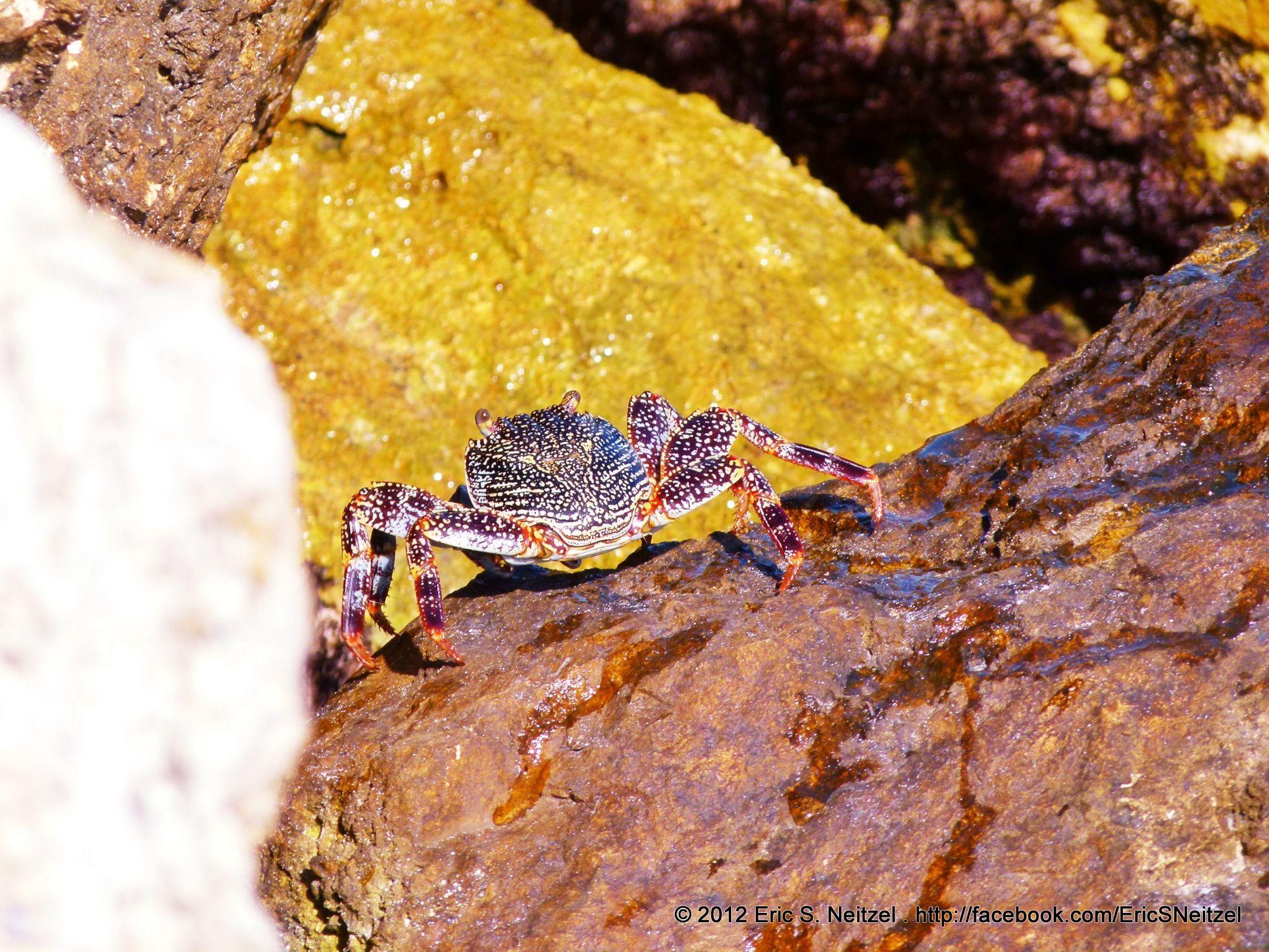 Crabs  @Hacienda Tres Ríos Resort, Spa and Nature Park