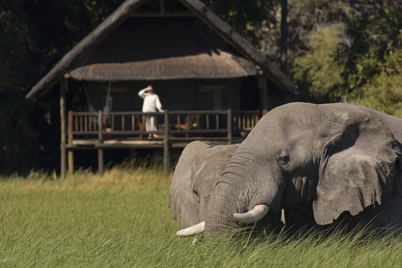 The Most Perfect View! Okavango Delta, Botswana.  BelAfrique your personal travel planner - www.BelAfrique.com