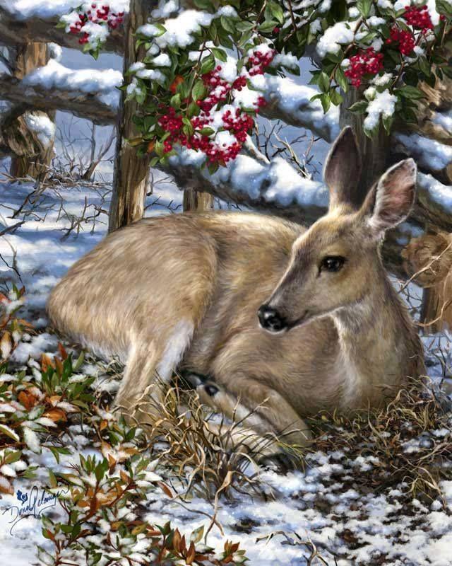 Картинки маем, картинки анимашки животных