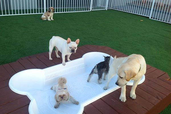 Luxury Dog Boarding Las Vegas Nv Luxe Pet Hotels Doggy Day Carepet