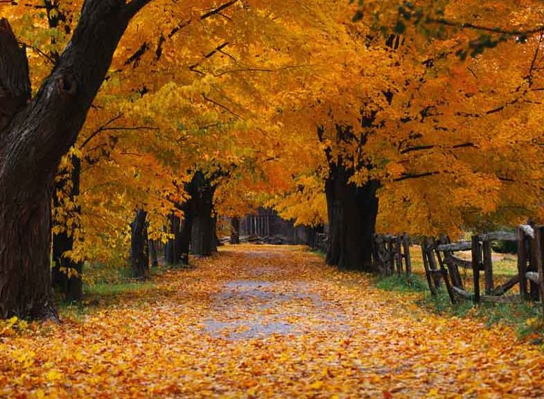 autum greetings autum   Fall weddings! My Autumn Place Cards