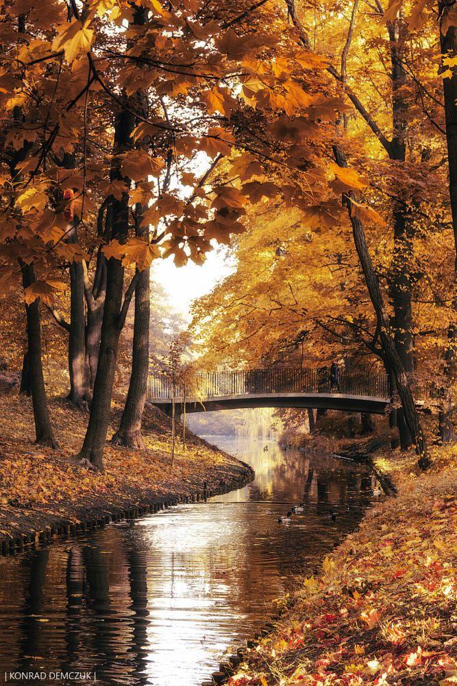 autumn symphony by Konrad Demczuk on 500px #autumnscenery