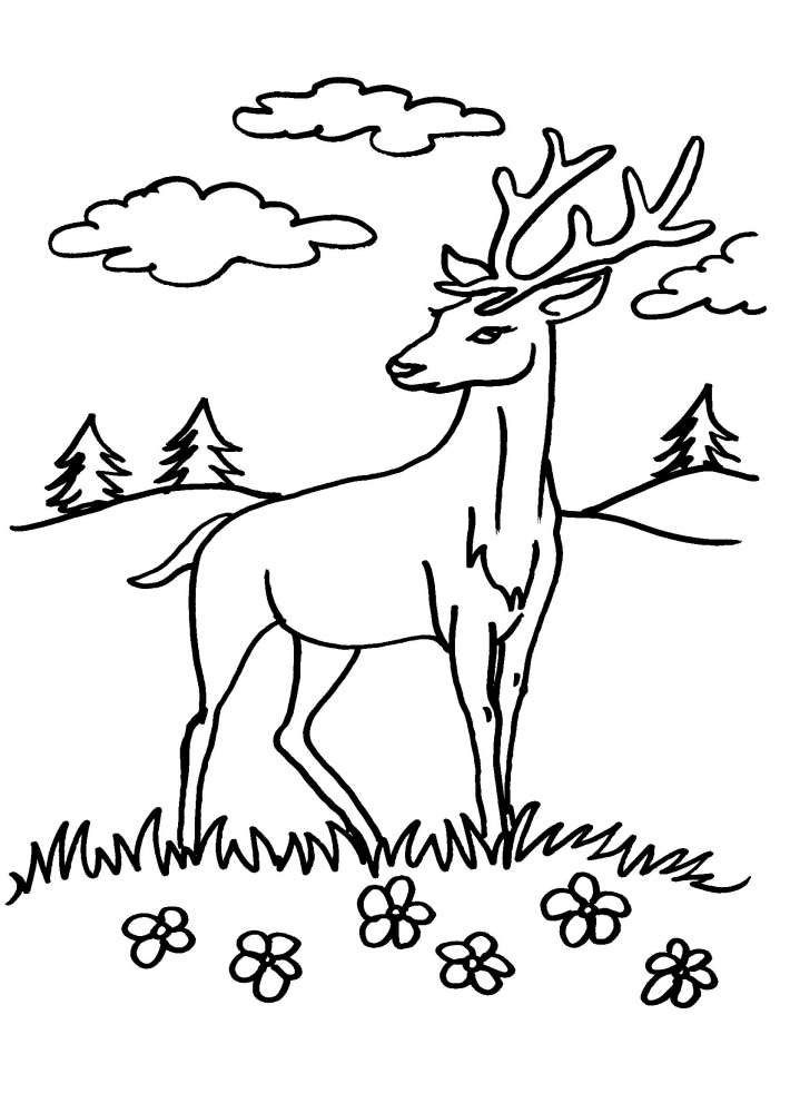 Cerb Planse De Colorat Si Educative Cerb Desene și Păduri