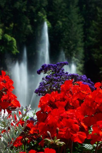 Picture - Fountains and flowers at Butchart Gardens in Victoria. | PlanetWare #butchartgardens Picture - Fountains and flowers at Butchart Gardens in Victoria. | PlanetWare #butchartgardens
