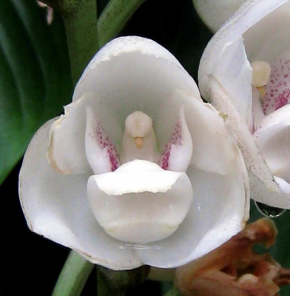 Pin On Flores Orquideas