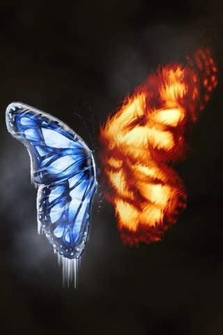 Fire And Ice Butterfly