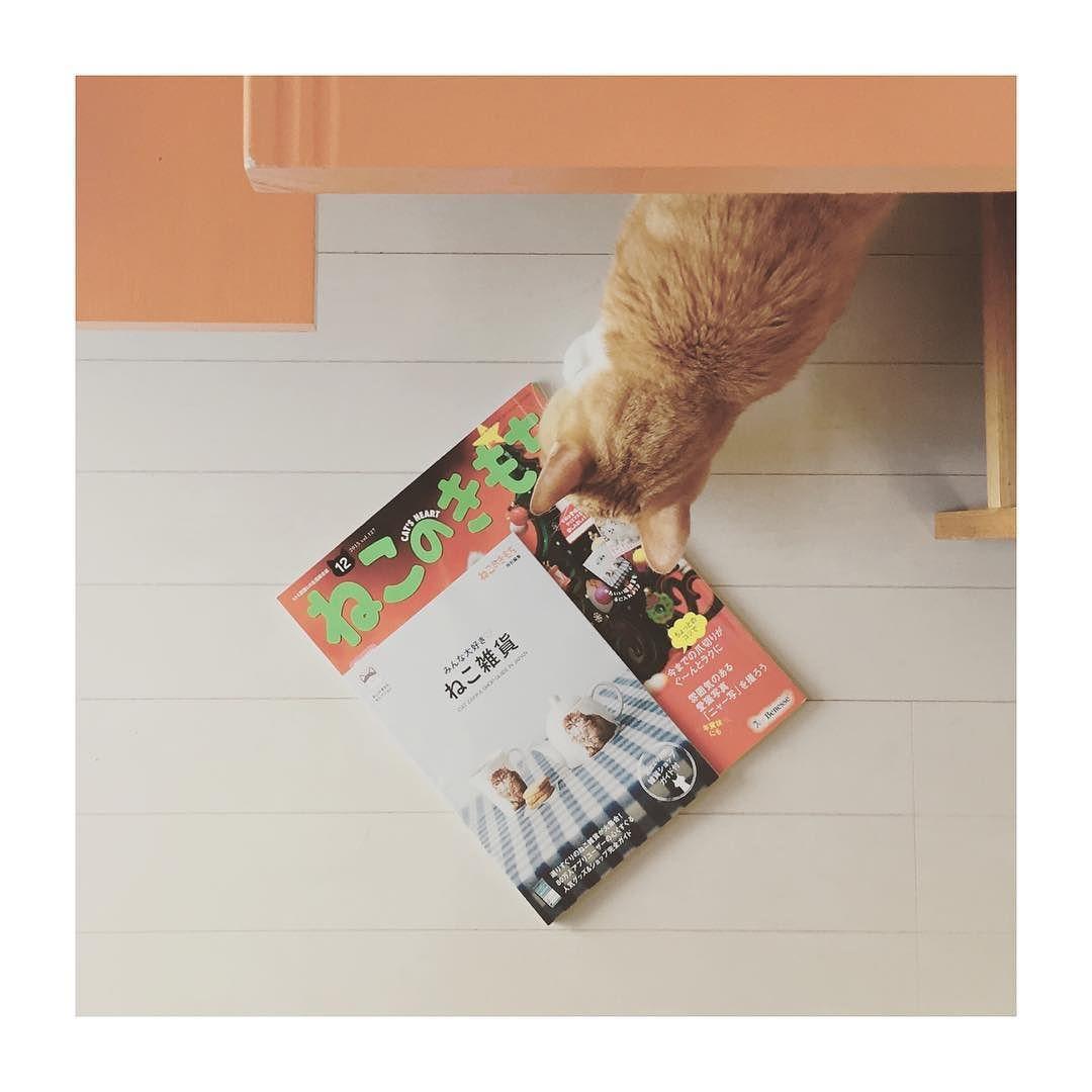 ねこのきもち12月号のプレゼントコーナーに9月に出版した本こむぎといつまでもが載っていますー(ꇴ) ねこのきもちを購読されている方でまだ本をお持ちでない方はぜひ 今回ねこ雑貨店ガイドが付いてた ω #ねこのきもち #こむぎが載ってるよ by tomochunba