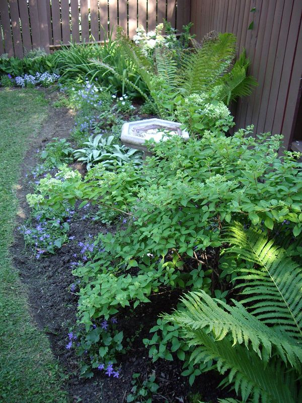 small shade garden | garden | Pinterest | Garden ideas, Fern and ...