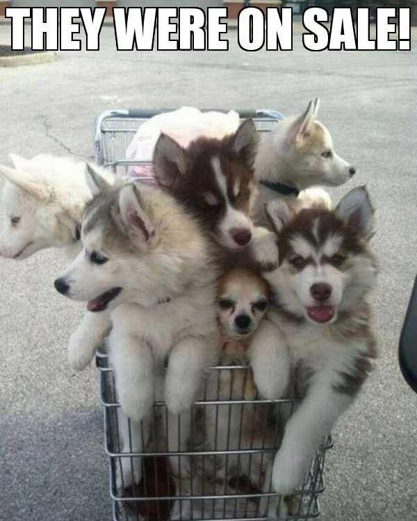 They Were On Sale Hewan Lucu Anak Anjing Piaraan